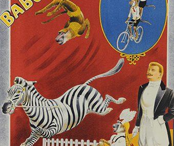 Grais Zebras & Baboons